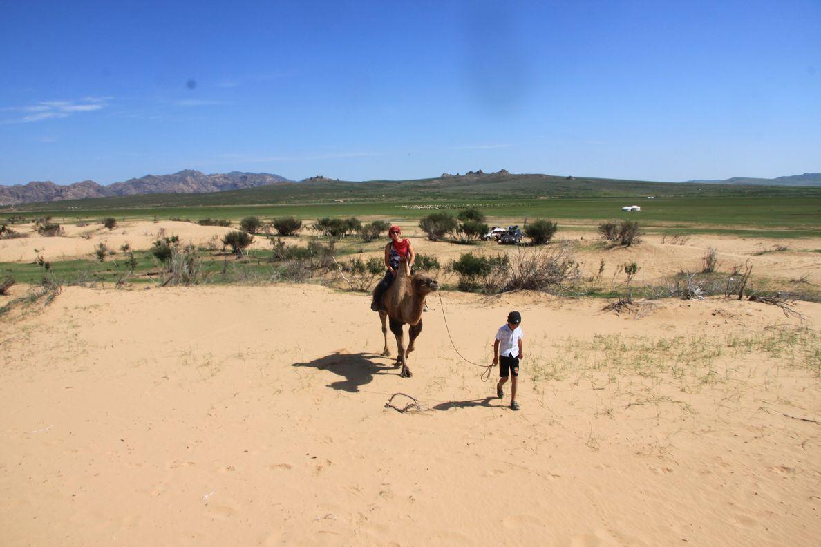 Tour en chameaux