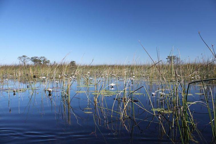 Le delta de l'Okawango