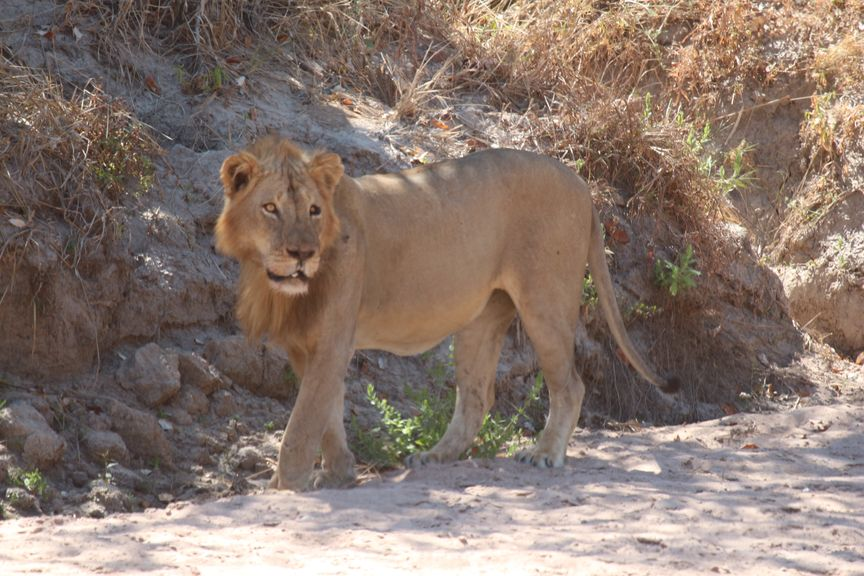 North Luangwa, la vraie réserve sauvage
