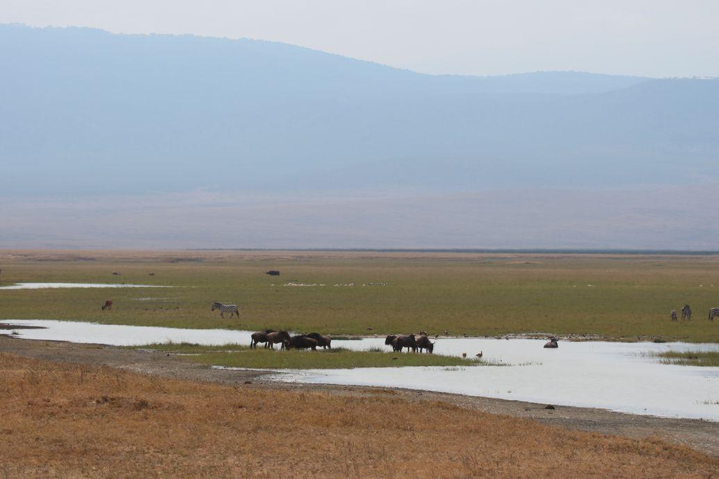 Le Ngorongoro