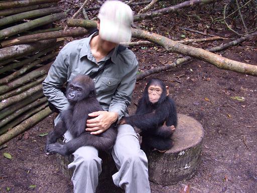 doreen-et-gorille-chimpanze