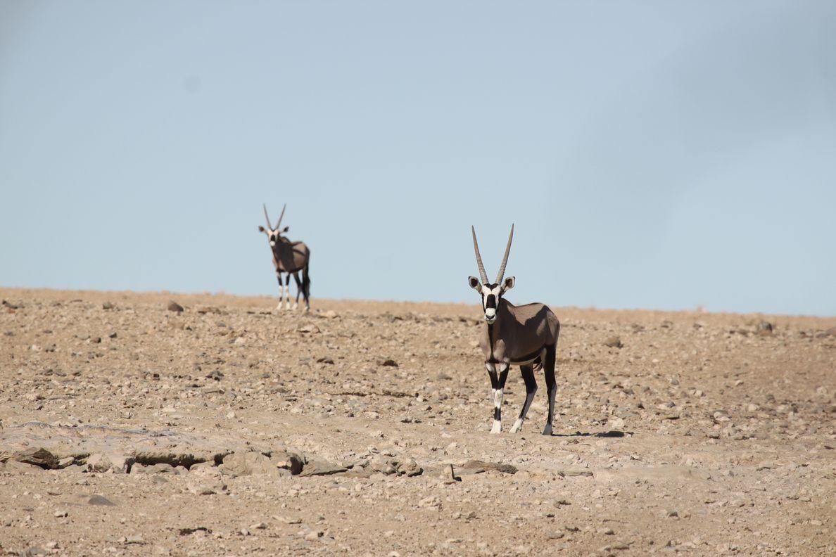 Namib 2