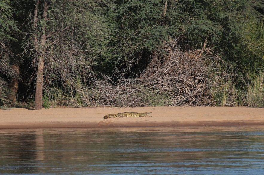 Camping des crocodiles.