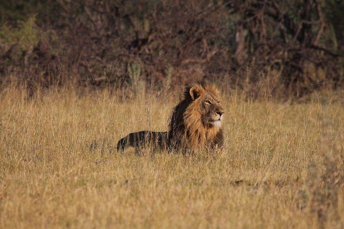 Les réserves du nord Botswana